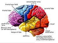 Brainbranding